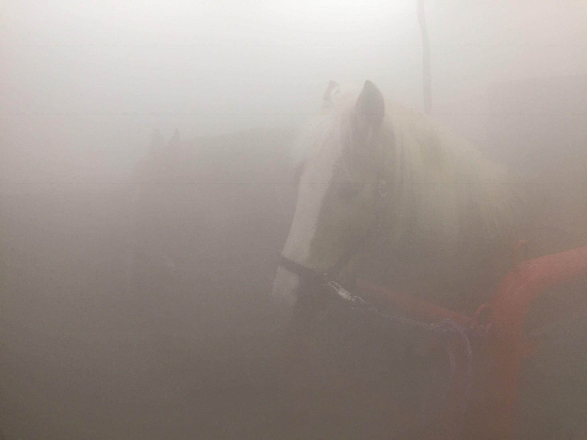 Zwei Pferde in der Sauna