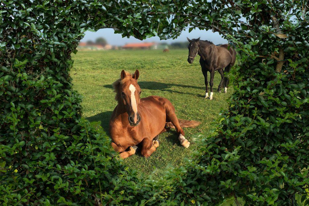 Ein Herz für Pferde
